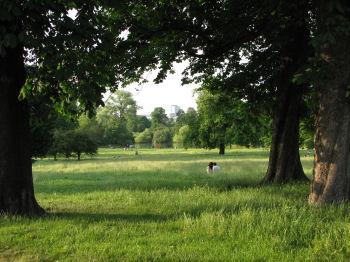 lines written kensington garden mathew arnold